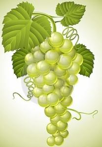 racimo-de-uva-con-las-hojas-verdes-16536989